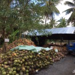 2-de-geplukte-kokosnoten