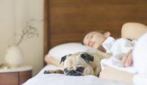 Duurzaam bedden- en badgoed